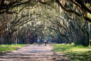 featured image for The Lowcountry & Sea Islands