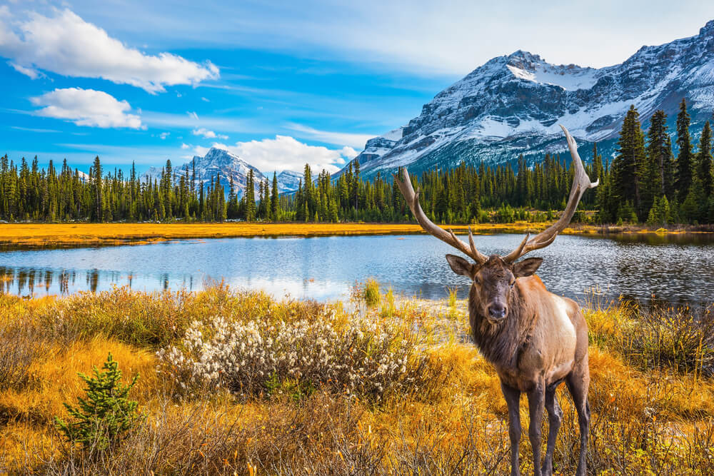 featured image for Destination spotlight: Canada